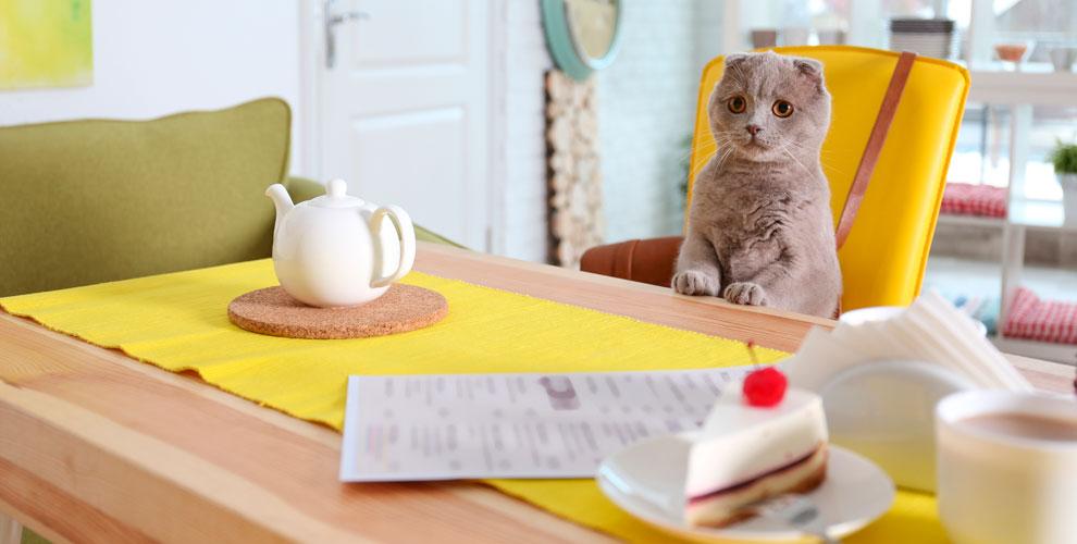 Котокафе CatStory: общение с кошками, уютная зона отдыха, настольные игры и другое