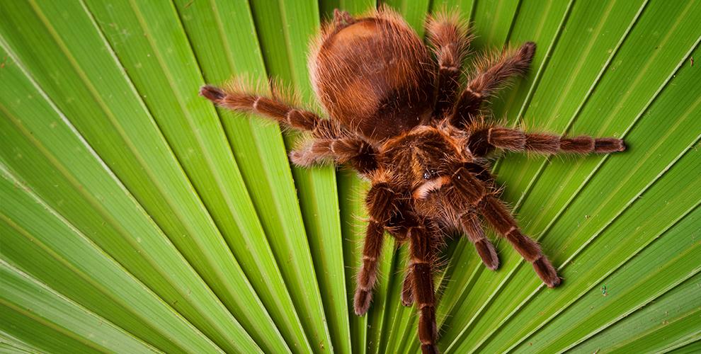 Билет на выставку «Удивительный мир пауков» для взрослых и детей