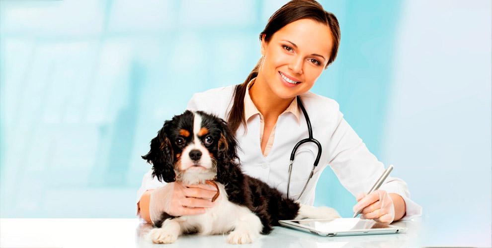 «Ветеринарный центр»: прием врача, УЗИ,обрезка когтей ианализы