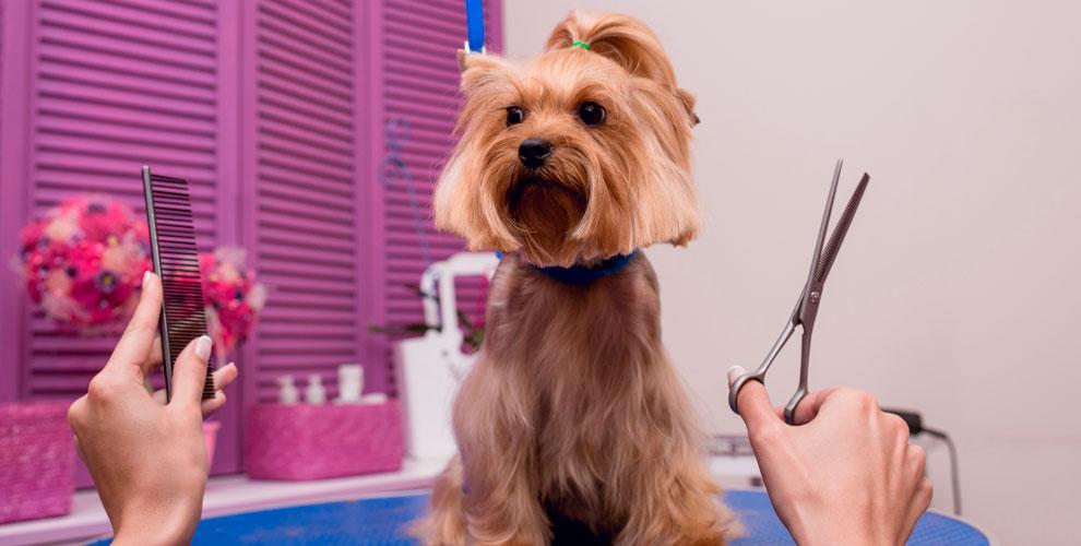 «Ваш Грумер»: стрижки для кошек и собак, наклейка антицарапок, УЗ-чистка зубов