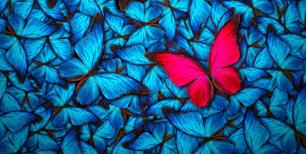 Выставка тропических бабочек и других экзотических обитателей в центре «Тропикариум»