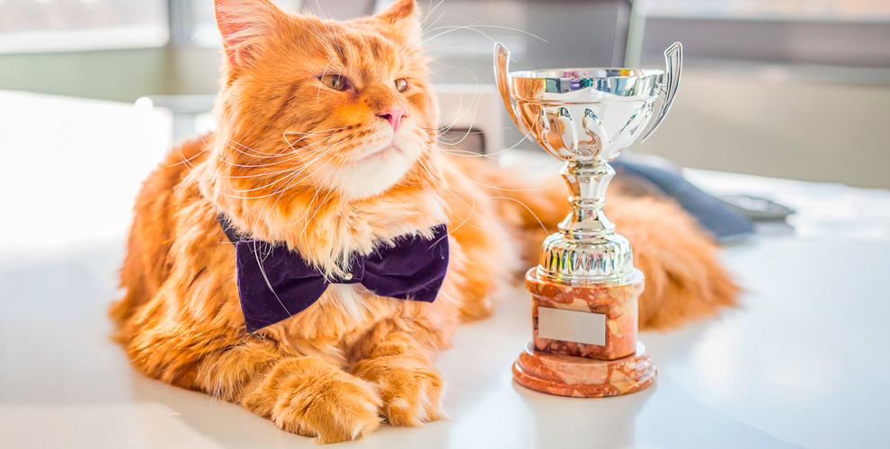 Посещение международной выставки кошек «Нам 25 лет» для детей и взрослых