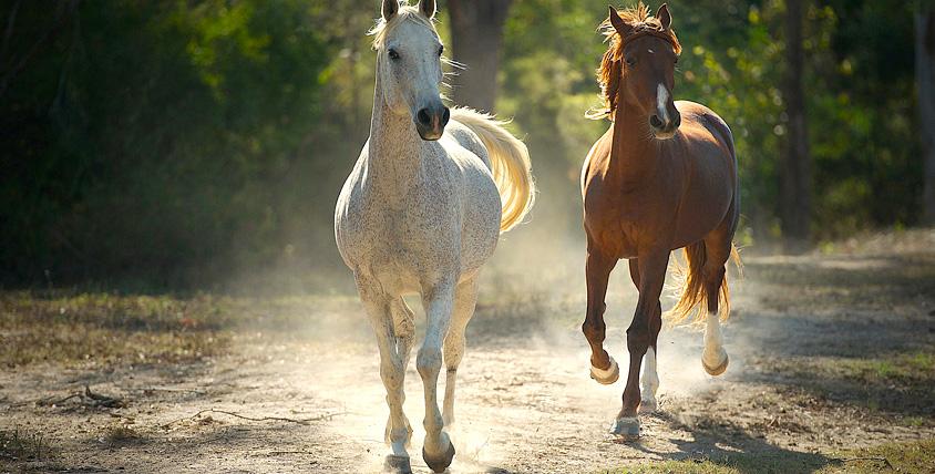 """Настоящее удовольствие от общения с лошадьми! Конные прогулки в будние и выходные дни от частной конюшни """"Эквилого"""""""