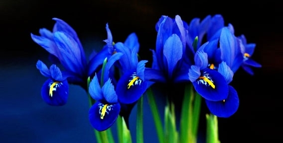 """Свежесрезанные цветы, выращенные в собственных теплицах и цветы местного производства от салона цветов """"Аэдис"""""""