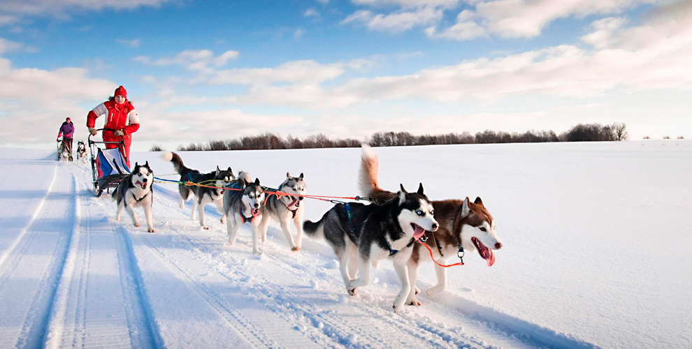 База отдыха «Мыс Рундук»: аренда беседки и катание на собачьих упряжках