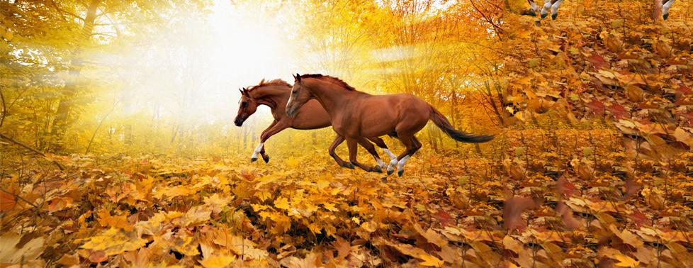"""Активный и полезный отдых на свежем воздухе! Конная прогулка по лесу от КСК """"Бастион"""""""