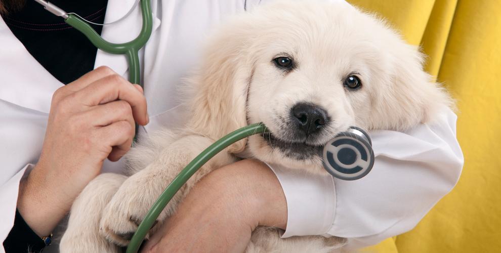 Стерилизация, кастрация, соскобы, анализы вветеринарной клинике ZooHome