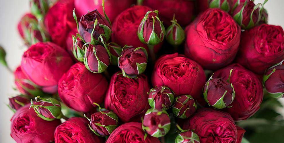 Оптовый склад Сvetclub.ru: пионовидные розы, кустовые хризантемы и другие цветы