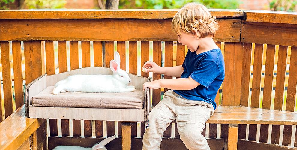 Посещение контактного зоопарка «Веселые Зверюшки» для взрослых и детей