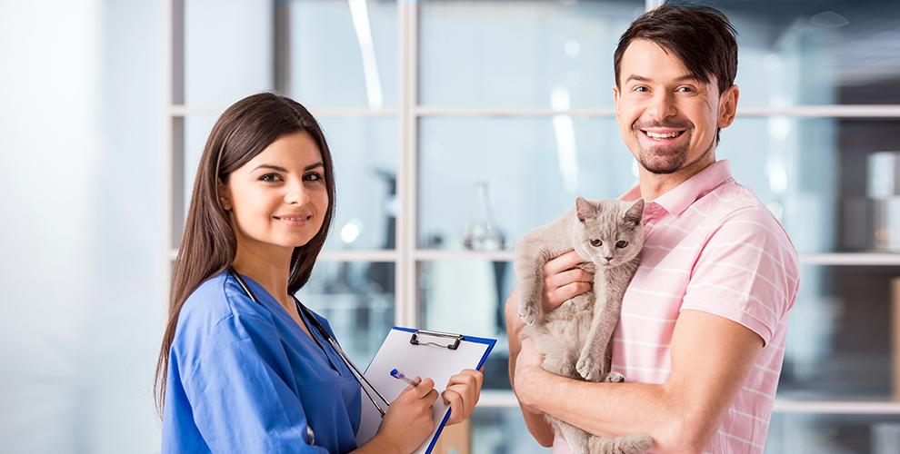 Кастрация и стерилизация кошек, кардиологическое обследование в клинике «Доверие»
