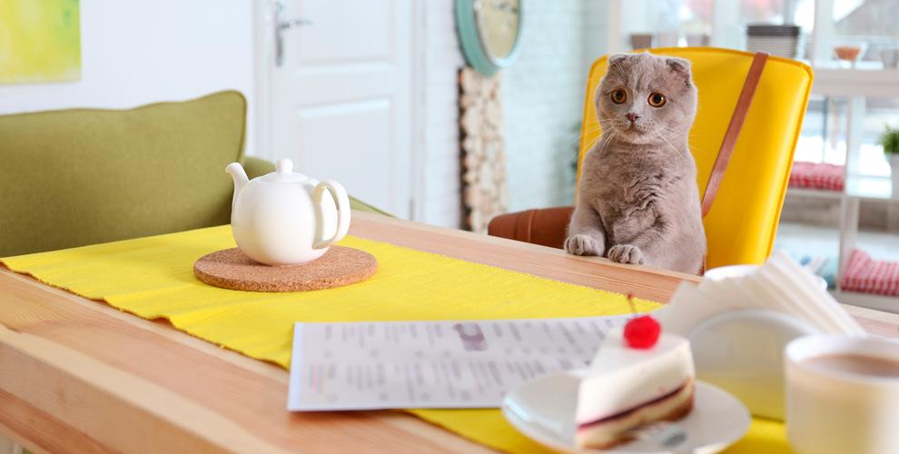 Пушистые коты, чай,настольные игры иприставка втайм-кафе «Мяу»
