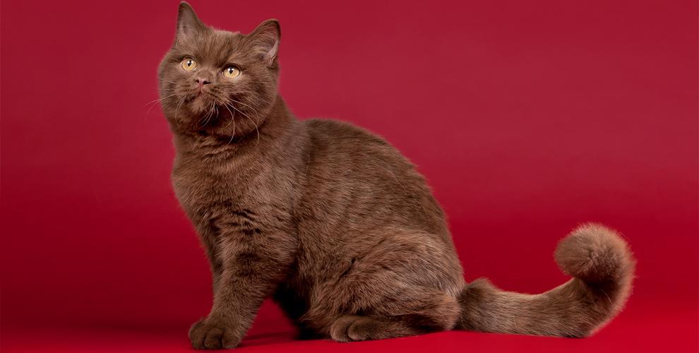 Клуб любителей кошек «Кэт»приглашает детей ивзрослых навыставку