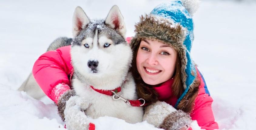 """Экскурсия """"Осень с хаски"""": рассказы, общение с собаками и не только в СК """"Бореалис"""""""