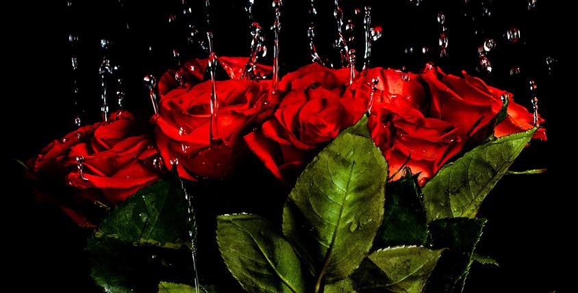 Букеты из роз от студии LaBuke