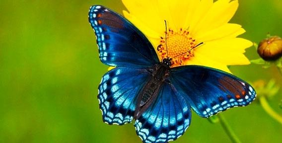 """Билеты и экскурсии для детей и взрослых - путешествие к экзотической природе! Парк живых тропических бабочек в ТРК """"Куба"""" ждет вас"""