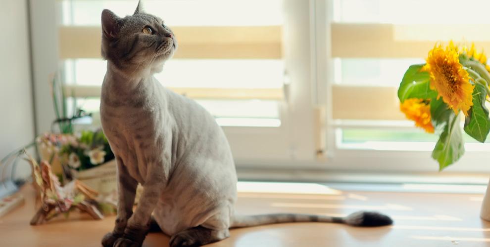 «Ваш Грумер»: стрижки для кошек и собак, УЗ-чистка зубов, наклейка антицарапок