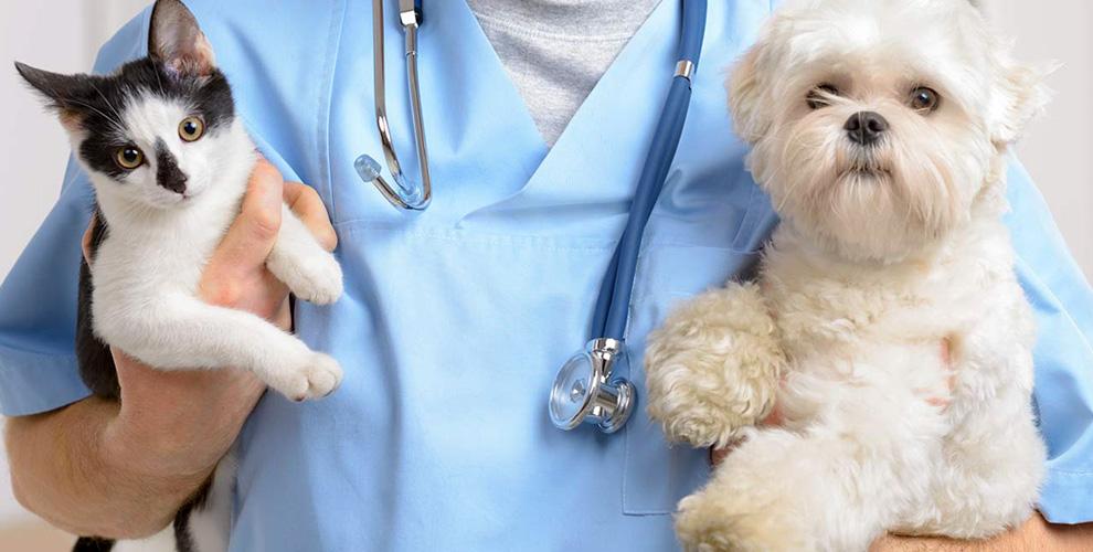 Консультация врача, кастрация котов исанация ротовой полости вклинике «Гармония»