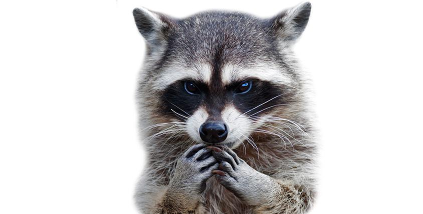 """Увлекательное путешествие в мир животных! Домашние и экзотические зверюшки ждут вас в контактном зоопарке """"Простоквашино"""""""