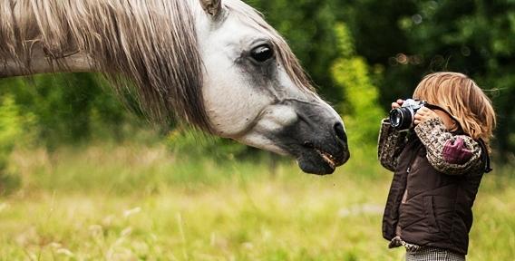 """Занятия по обучению верховой езде для детей в конном клубе """"Добрая Лошадка"""". Вперёд к большим победам!"""
