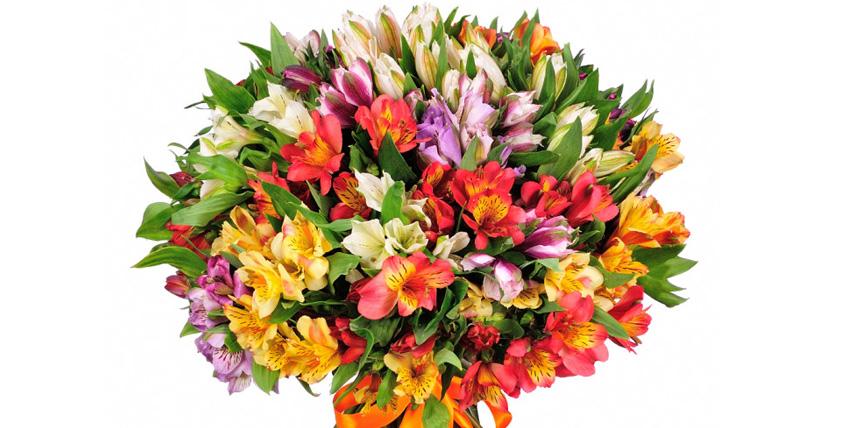 """Свежесрезанные цветы, выращенные в собственных теплицах, горшечные растения и букеты от салона цветов """"Аэдис"""""""