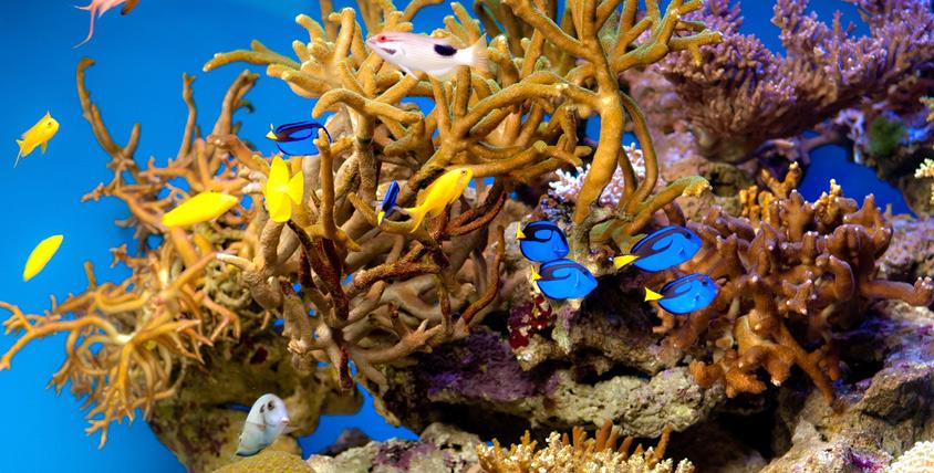"""Удивительная экскурсия в """"Морской аквариум"""" на Чистых прудах"""