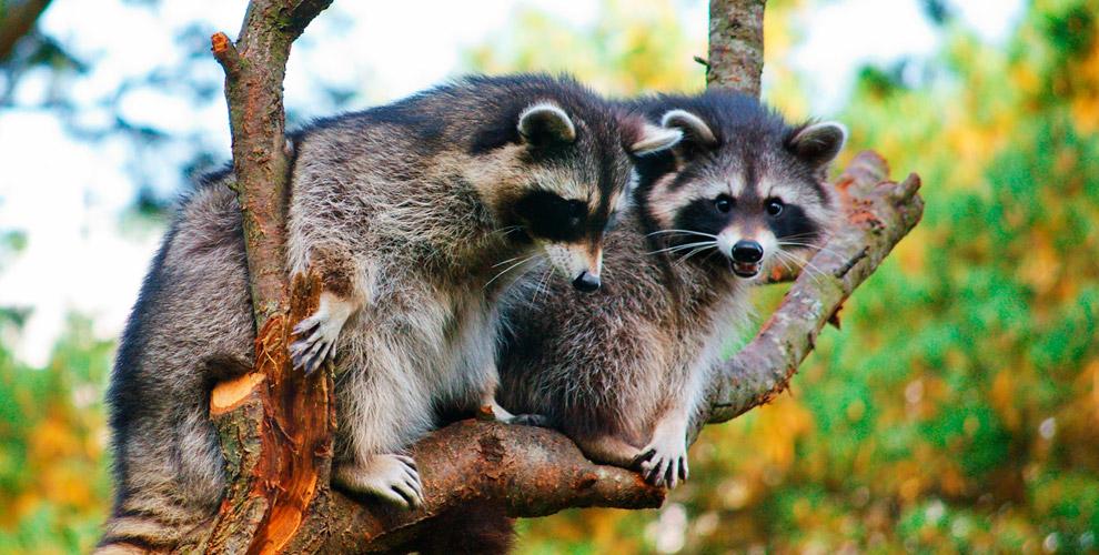 Посещение контактного зоопарка «Ребятам о зверятах»