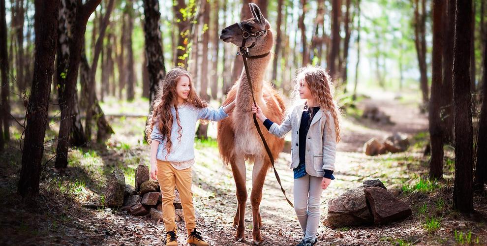 """Аренда ламы для фотосессии, катание и верховая езда в конном дворе """"Фаворит"""""""
