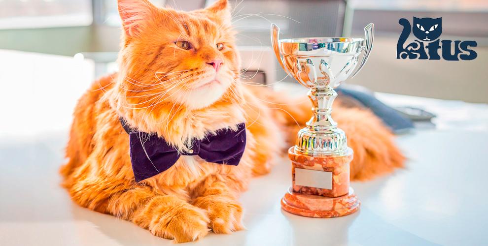 Билеты намеждународную выставку кошек длядетей ивзрослых отклуба «КАТУС»