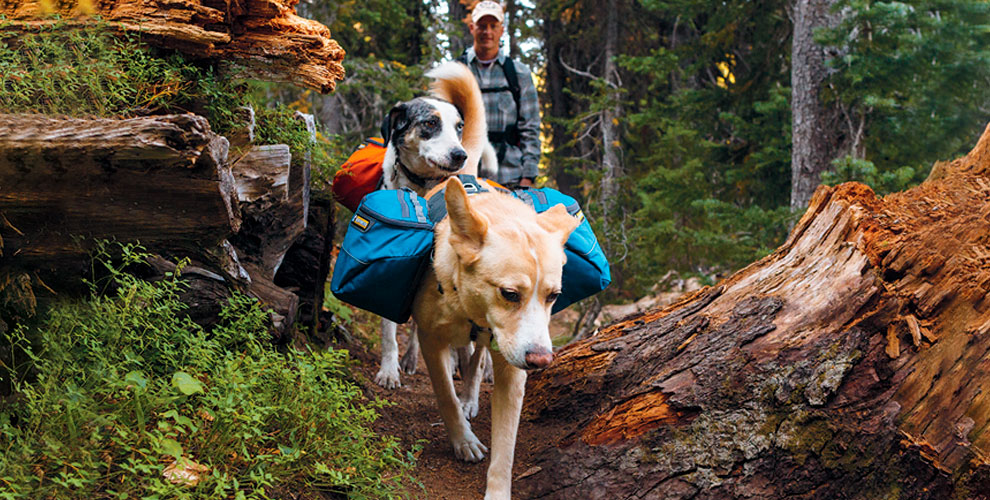 Кросс-поход, размещение вкемпинге ипосещениедеревни ездовых собак «Серебро Севера»