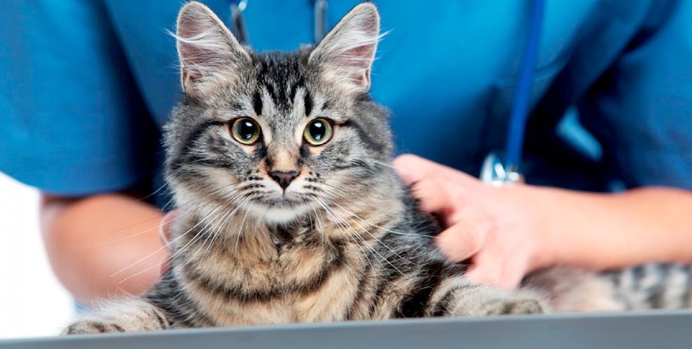 Комплекс услуг для домашних любимцев в ветеринарном центре «Новокосино»