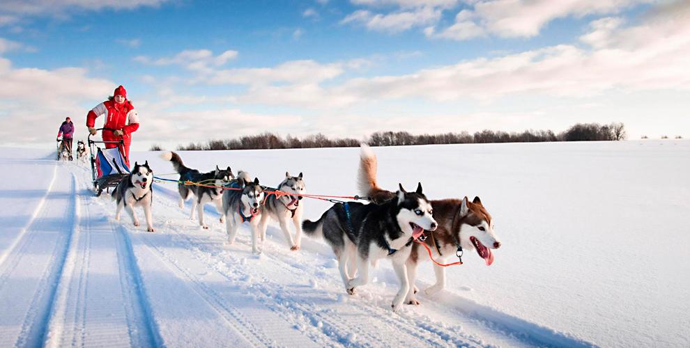 База отдыха «Мыс Рундук»: катание на собачьих упряжках и праздник к 23 февраля