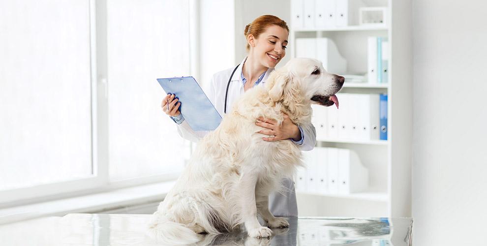 Кастрация, стерилизация и УЗ-чистка зубов в ветеринарной клинике «Оберег»