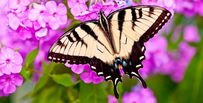"""Насладитесь уникальной красотой экзотической природы! Билеты от 50 рублей в парк живых бабочек в ТРК """"Куба"""""""