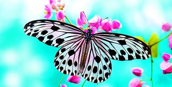 """Парк живых тропических бабочек в ТРК """"Куба"""" приглашает детей и взрослых познакомиться с экзотической природой!"""