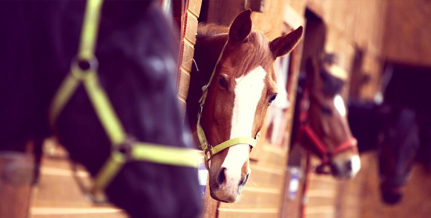 """Катание на лошади по лесу, занятия по верховой езде и прокат лошади для фотосессии в конном клубе """"Казачий"""""""