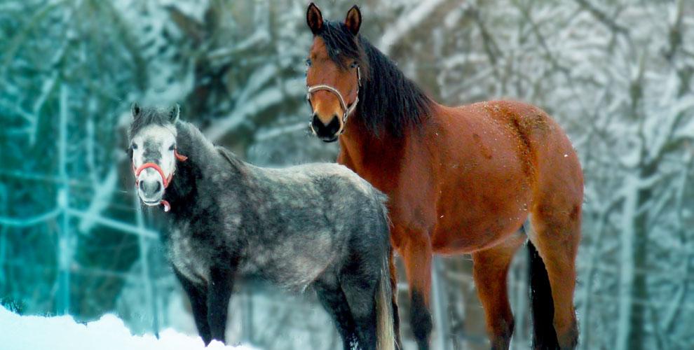 «Фаворит»: катание налошади илипони, аренда животного дляфотосессии