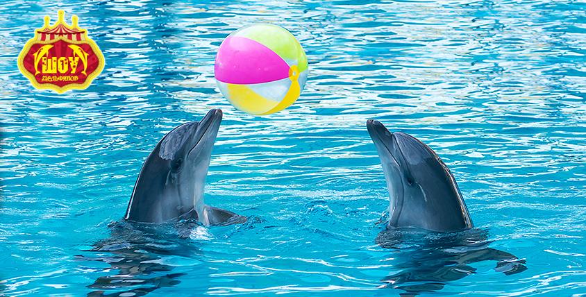 """Два билета по цене одного на анимационное шоу с дельфинами """"Остров Мадагаскар"""""""