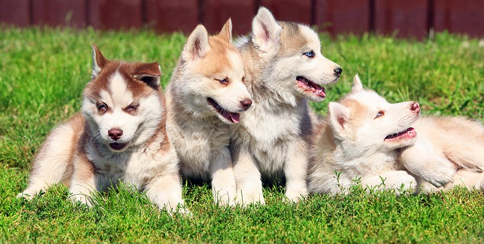 «Хаски-парк»: посещение, экскурсии, спортивный ДогТрекинг иобщение ссобаками