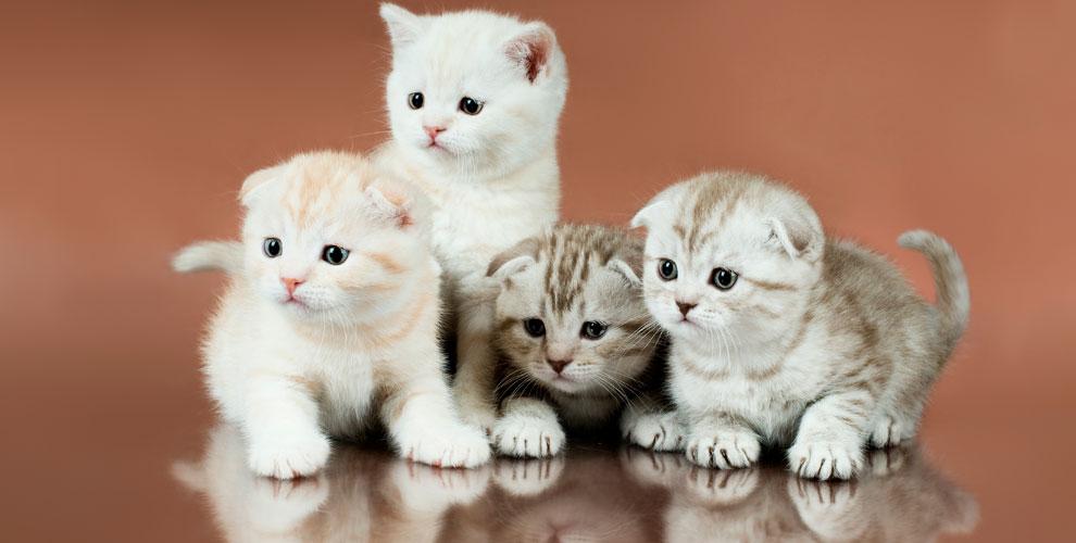 Билеты навыставку кошек длядетей ивзрослых вклубе «Кэт»