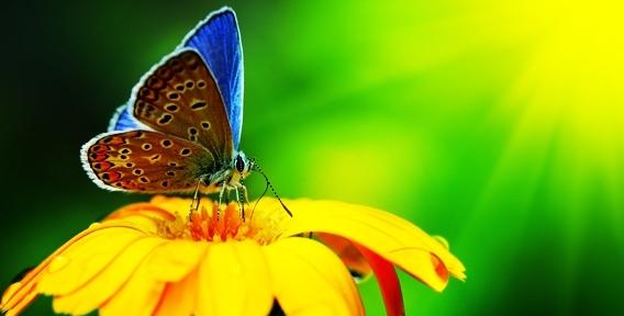 """Парк живых тропических бабочек в ТРК """"Куба"""" приглашает взрослых и детей окунуться в яркий мир тропиков!"""