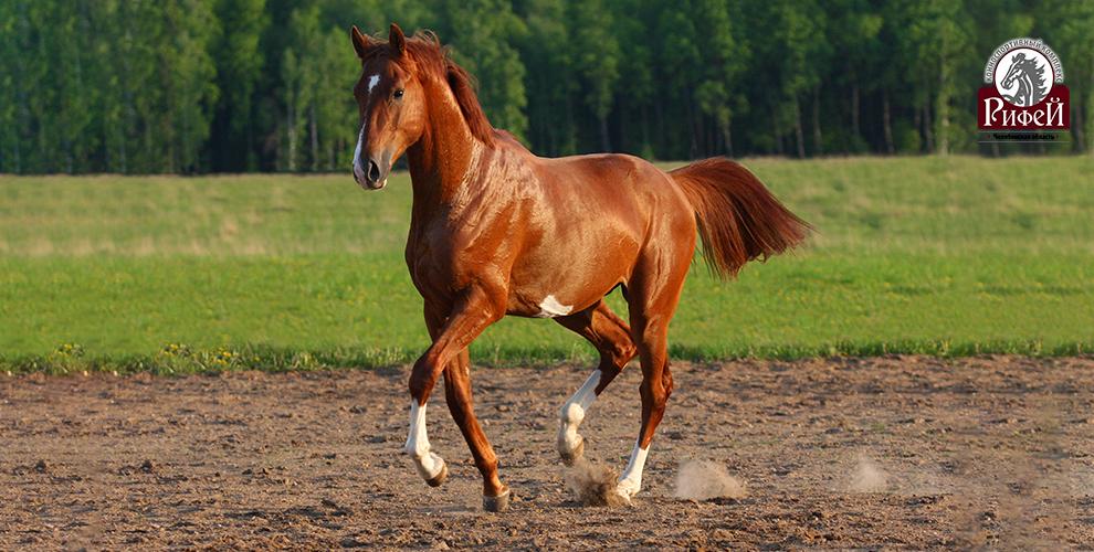 Конноспортивный комплекс «Рифей»: билеты напосещение конной выставки UralHorse
