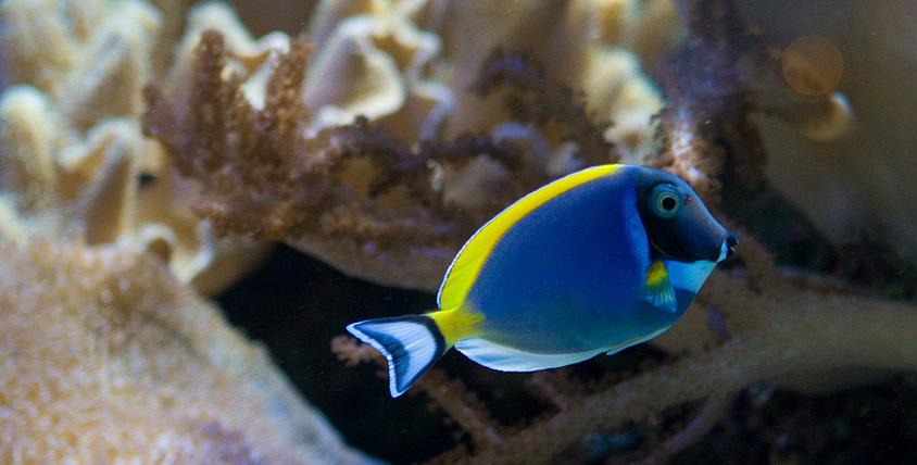 """Завораживающие красоты волшебного кораллового сада! Удивительная экскурсия в """"Морской аквариум"""" на Чистых прудах"""