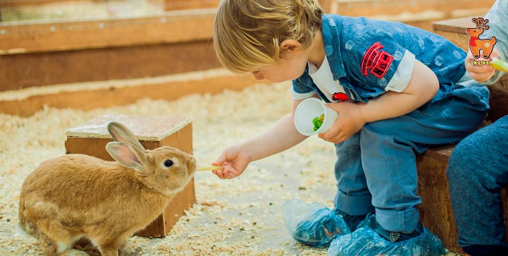 Посещение зоопарка «Сказка» для взрослых и детей