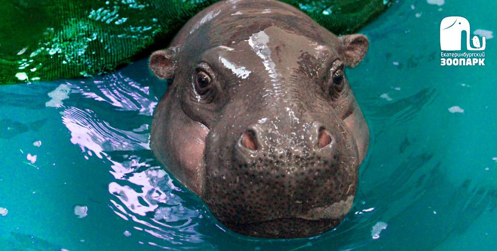 Екатеринбургский зоопарк - увлекательное путешествие в мир животных