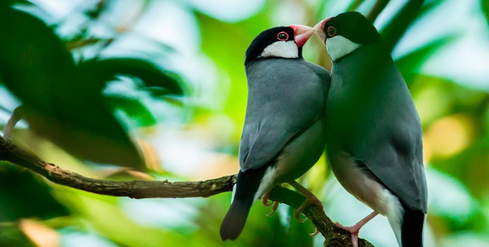 Билеты навыставку певчих идекоративных птиц длядетей ивзрослых