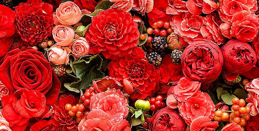"""Цветочный бум! Роскошные розы Эквадор, нежные тюльпаны, альстромерии, герберы, хризантемы и букеты от салона цветов """"Камелия"""""""