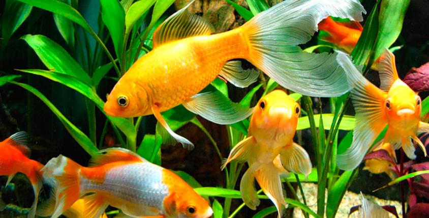 """Интересная экскурсия для детей  и взрослых в """"Морской аквариум"""" на Чистых прудах"""
