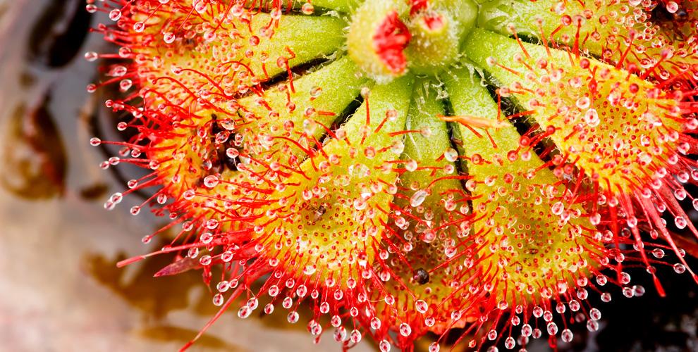 Билеты навыставку «Хищные растения» впарке бабочек «ВТропиках»