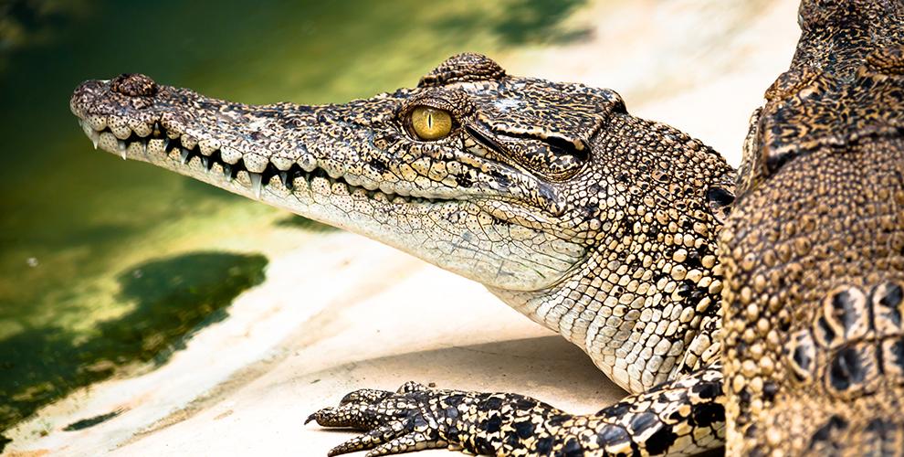 Билеты на посещение крокодиловой фермы в ТРК «Амбар»»