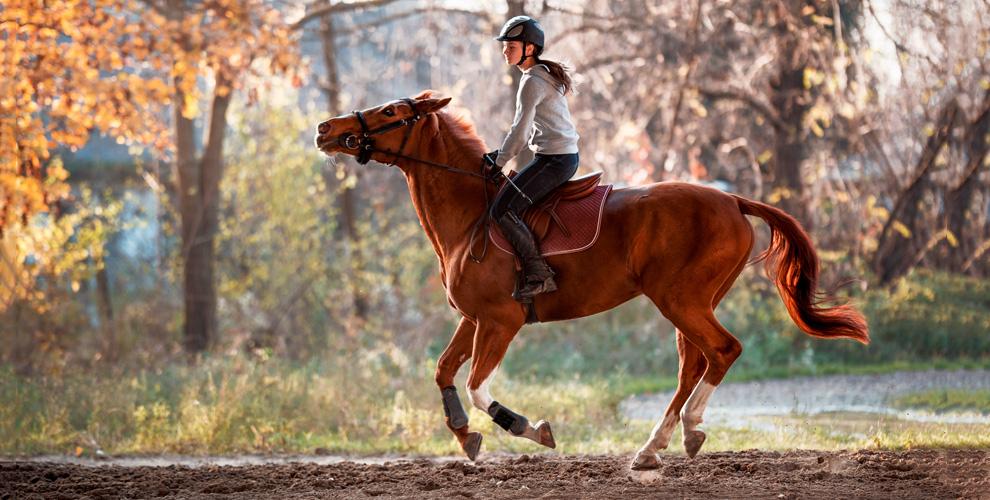 Часовая конная прогулка с фотосессией от конно-спортивного клуба «Дублер»
